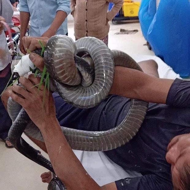 Tài xế kể lại khoảnh khắc người đàn ông cầm rắn hổ mang chúa nhờ đưa đi cấp cứu: Nhìn con rắn tôi cũng sợ nhưng nghĩ đến việc cứu người... - Ảnh 1.