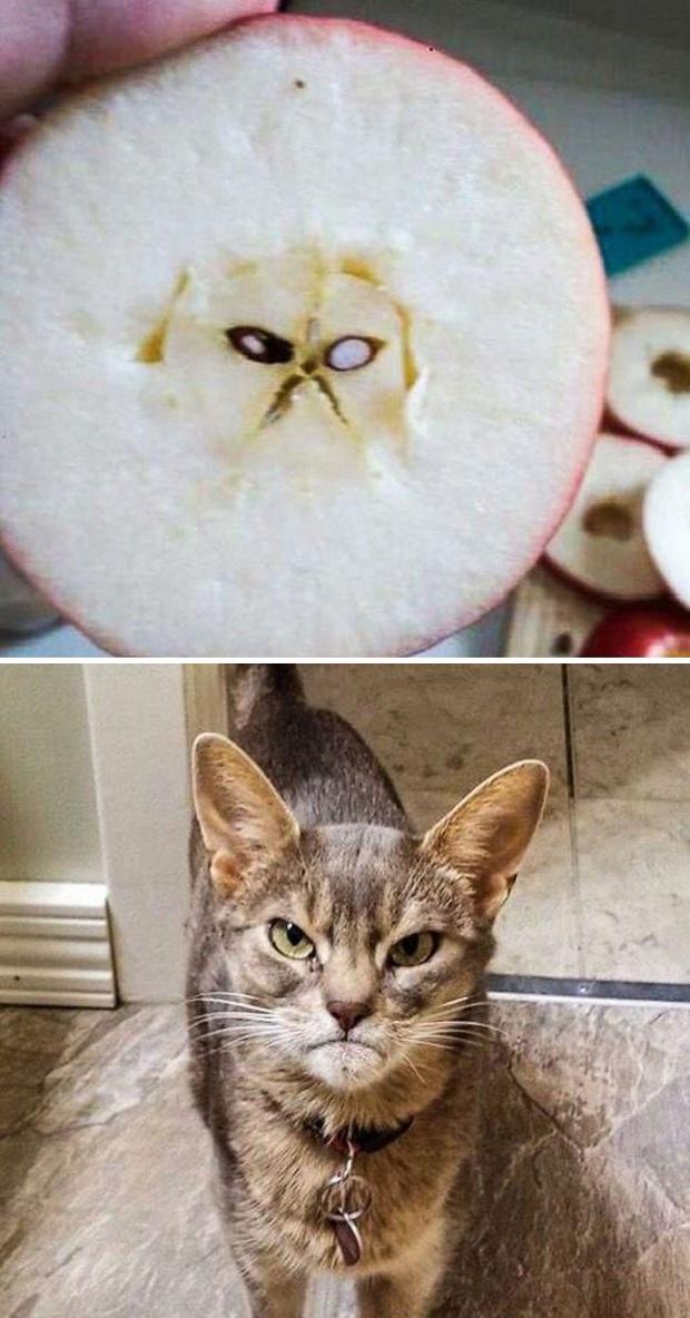 Khi con người bị yêu hoàng thượng quá mức, nhìn đâu cũng thấy thần mèo hiển linh - Ảnh 17.