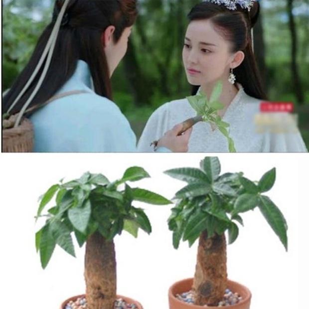 Kho đạo cụ siêu nghèo của phim cổ trang Trung: Hết gắn hoa giả lại dùng dây buộc tóc làm ngọc minh châu - Ảnh 5.