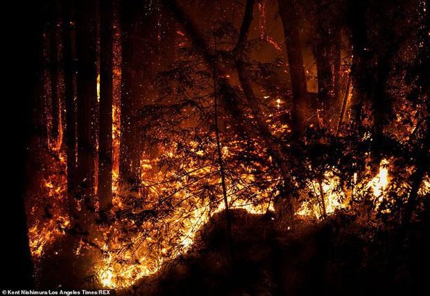 California hóa Hỏa Diệm Sơn vì cháy rừng, dân liều mình lái xe lao qua biển lửa - Ảnh 4.