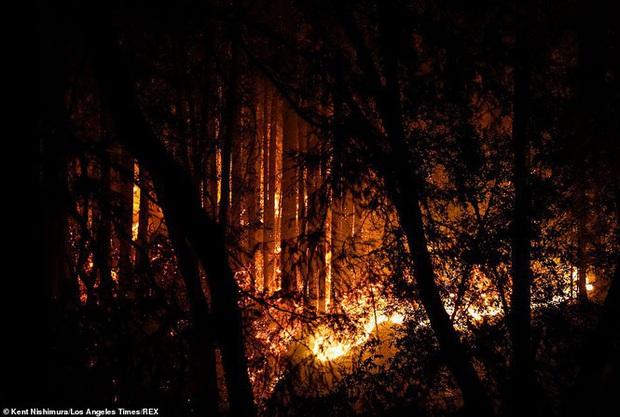 California hóa Hỏa Diệm Sơn vì cháy rừng, dân liều mình lái xe lao qua biển lửa - Ảnh 8.