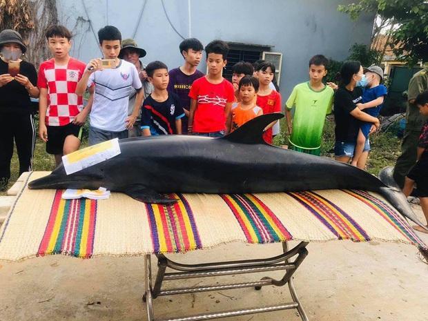 Cá Ông nặng gần 300kg lụy trên sông ở Quảng Nam - Ảnh 1.