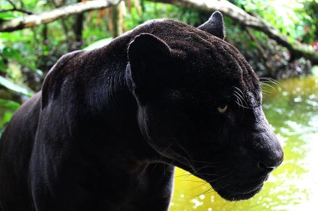 19 chú động vật hắc ám nhìn chẳng khác gì sứ giả của bóng đêm - Ảnh 4.