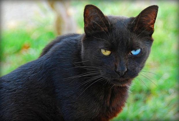 19 chú động vật hắc ám nhìn chẳng khác gì sứ giả của bóng đêm - Ảnh 8.
