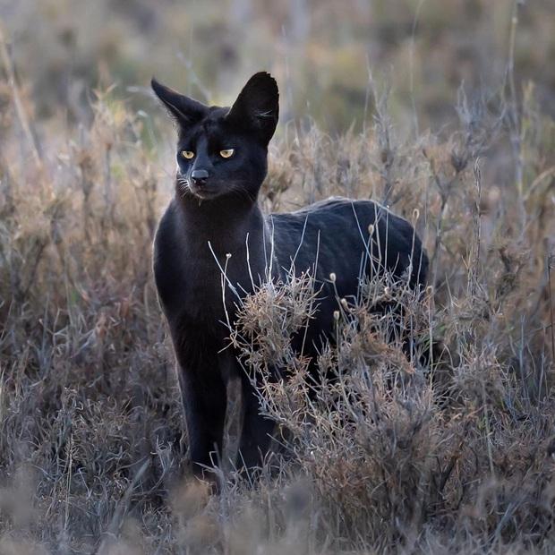 19 chú động vật hắc ám nhìn chẳng khác gì sứ giả của bóng đêm - Ảnh 10.