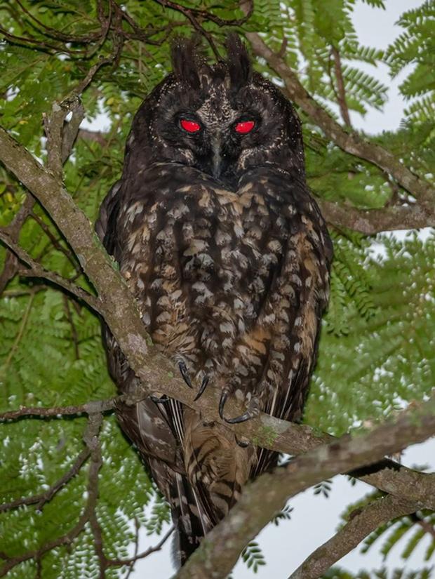 19 chú động vật hắc ám nhìn chẳng khác gì sứ giả của bóng đêm - Ảnh 15.