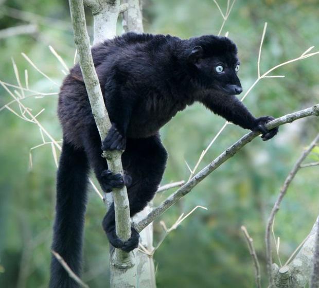 19 chú động vật hắc ám nhìn chẳng khác gì sứ giả của bóng đêm - Ảnh 18.