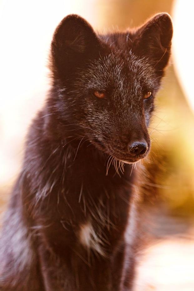 19 chú động vật hắc ám nhìn chẳng khác gì sứ giả của bóng đêm - Ảnh 19.