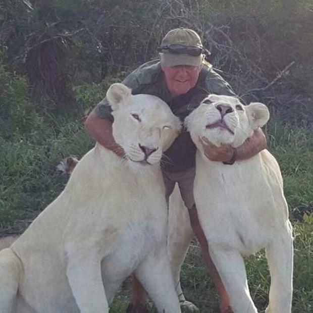 Sinh nghề tử nghiệp: Cả đời cống hiến cho động vật hoang dã, nhà bảo tồn bất ngờ bị đôi sư tử trắng quý hiếm mình nuôi cắn chết - Ảnh 1.