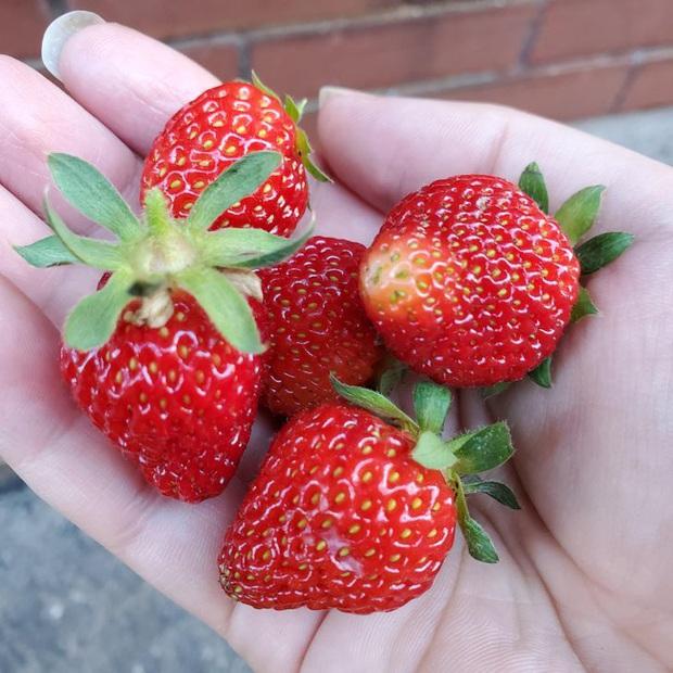 Tưởng là thứ phải bỏ đi, 7 phần thừa của các loại thực phẩm này có thể tái sử dụng như những món ăn thơm ngon - Ảnh 11.