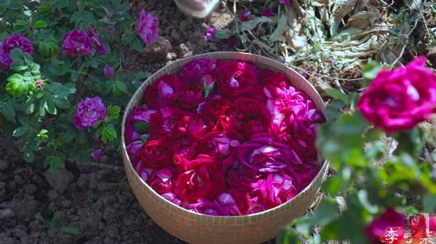 Tiên nữ đồng quê Lý Tử Thất mê hoặc hội chị em bằng vườn hồng như chốn cổ tích kèm công thức chế biến tỷ thứ từ loại hoa này - Ảnh 7.