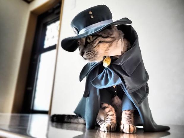 Chú mèo chuyên cosplay các nhân vật anime nổi tiếng, sở hữu 16 nghìn fan trung thành ngồi hóng ngày đêm - Ảnh 1.
