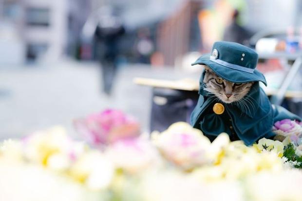 Chú mèo chuyên cosplay các nhân vật anime nổi tiếng, sở hữu 16 nghìn fan trung thành ngồi hóng ngày đêm - Ảnh 3.