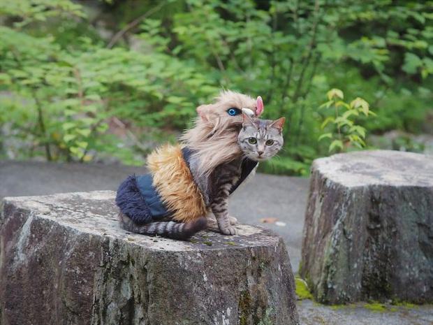 Chú mèo chuyên cosplay các nhân vật anime nổi tiếng, sở hữu 16 nghìn fan trung thành ngồi hóng ngày đêm - Ảnh 4.
