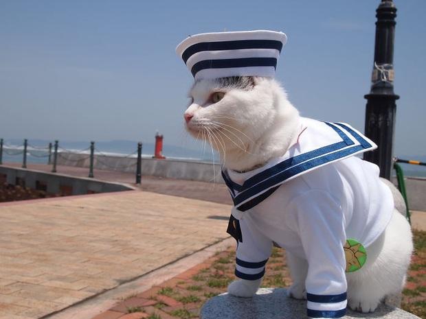 Chú mèo chuyên cosplay các nhân vật anime nổi tiếng, sở hữu 16 nghìn fan trung thành ngồi hóng ngày đêm - Ảnh 5.
