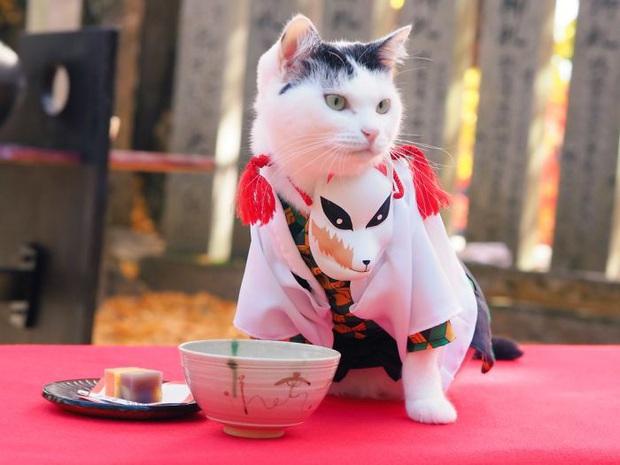 Chú mèo chuyên cosplay các nhân vật anime nổi tiếng, sở hữu 16 nghìn fan trung thành ngồi hóng ngày đêm - Ảnh 6.