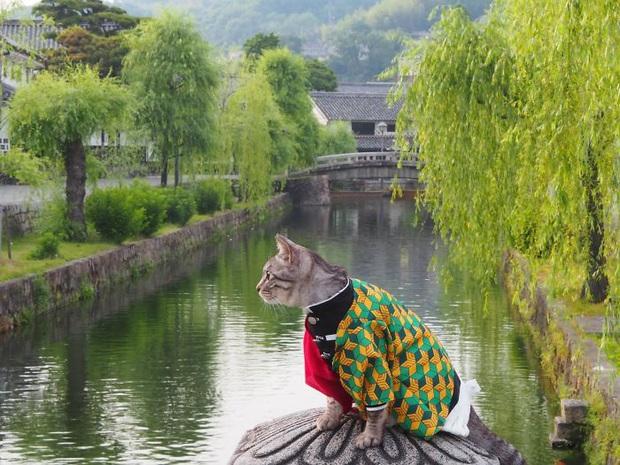 Chú mèo chuyên cosplay các nhân vật anime nổi tiếng, sở hữu 16 nghìn fan trung thành ngồi hóng ngày đêm - Ảnh 7.