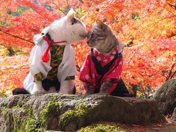 Chú mèo chuyên cosplay các nhân vật anime nổi tiếng, sở hữu 16 nghìn fan trung thành ngồi hóng ngày đêm - Ảnh 8.
