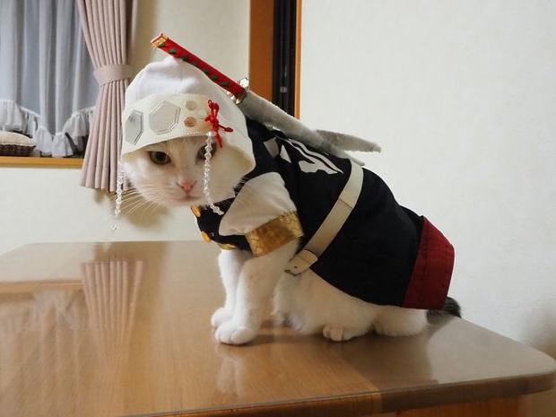 Chú mèo chuyên cosplay các nhân vật anime nổi tiếng, sở hữu 16 nghìn fan trung thành ngồi hóng ngày đêm - Ảnh 9.