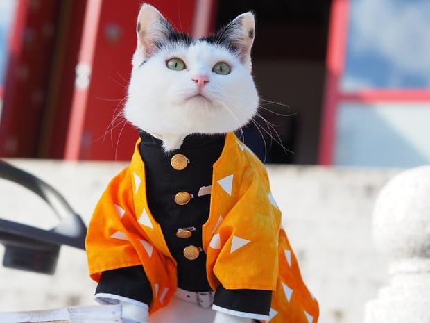 Chú mèo chuyên cosplay các nhân vật anime nổi tiếng, sở hữu 16 nghìn fan trung thành ngồi hóng ngày đêm - Ảnh 10.
