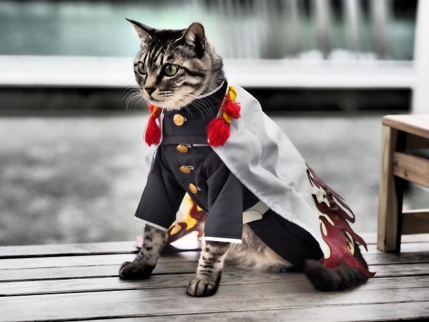 Chú mèo chuyên cosplay các nhân vật anime nổi tiếng, sở hữu 16 nghìn fan trung thành ngồi hóng ngày đêm - Ảnh 11.