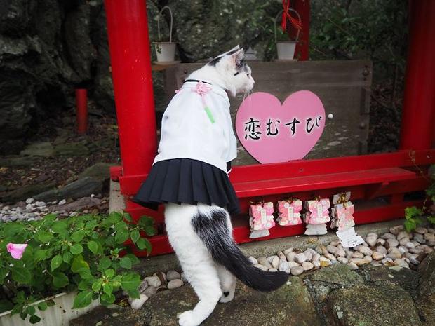 Chú mèo chuyên cosplay các nhân vật anime nổi tiếng, sở hữu 16 nghìn fan trung thành ngồi hóng ngày đêm - Ảnh 12.