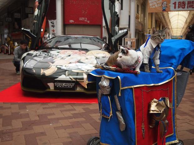 Chú mèo chuyên cosplay các nhân vật anime nổi tiếng, sở hữu 16 nghìn fan trung thành ngồi hóng ngày đêm - Ảnh 13.