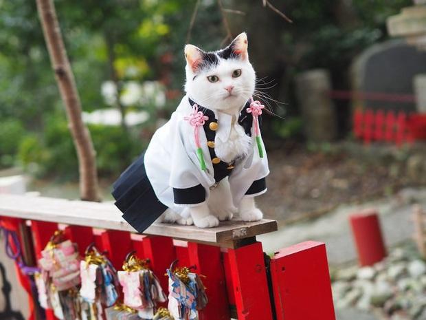 Chú mèo chuyên cosplay các nhân vật anime nổi tiếng, sở hữu 16 nghìn fan trung thành ngồi hóng ngày đêm - Ảnh 14.