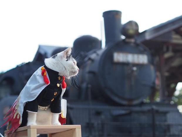 Chú mèo chuyên cosplay các nhân vật anime nổi tiếng, sở hữu 16 nghìn fan trung thành ngồi hóng ngày đêm - Ảnh 15.