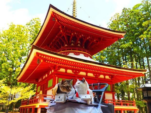 Chú mèo chuyên cosplay các nhân vật anime nổi tiếng, sở hữu 16 nghìn fan trung thành ngồi hóng ngày đêm - Ảnh 16.