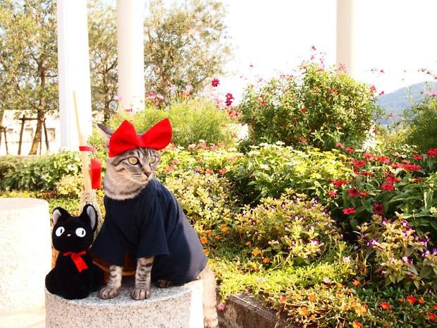 Chú mèo chuyên cosplay các nhân vật anime nổi tiếng, sở hữu 16 nghìn fan trung thành ngồi hóng ngày đêm - Ảnh 17.