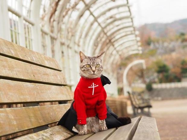 Chú mèo chuyên cosplay các nhân vật anime nổi tiếng, sở hữu 16 nghìn fan trung thành ngồi hóng ngày đêm - Ảnh 18.