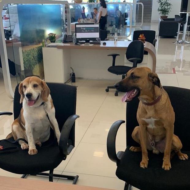 Showroom Hyundai nhận chó hoang vào làm việc, bao ăn ở và thăng chức 2 lần trong 3 tháng - Ảnh 5.