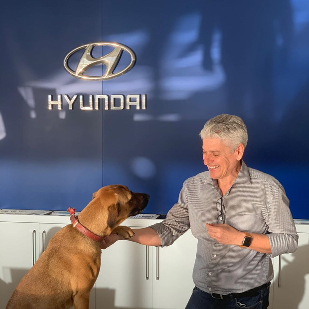 Showroom Hyundai nhận chó hoang vào làm việc, bao ăn ở và thăng chức 2 lần trong 3 tháng - Ảnh 6.