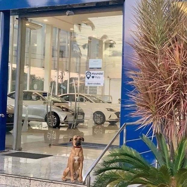 Showroom Hyundai nhận chó hoang vào làm việc, bao ăn ở và thăng chức 2 lần trong 3 tháng - Ảnh 2.