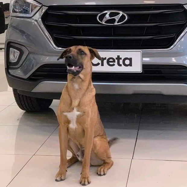 Showroom Hyundai nhận chó hoang vào làm việc, bao ăn ở và thăng chức 2 lần trong 3 tháng - Ảnh 3.