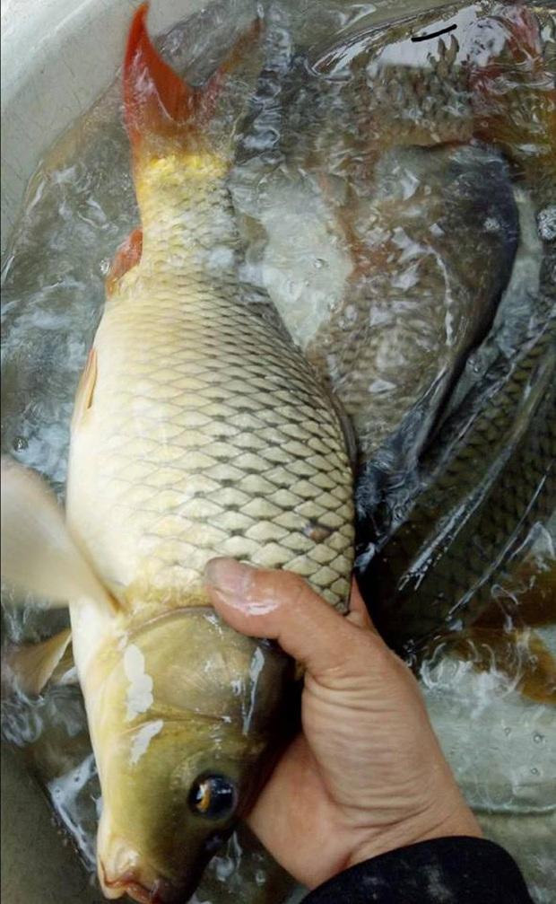 Cư dân mạng hoang mang trước món rau câu vảy cá chép, vừa nhìn ai cũng hỏi nhau: Có tanh không vậy? - Ảnh 6.