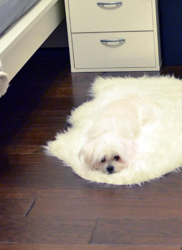 Bộ ảnh chứng minh sự lười biếng có thể khiến lũ động vật biến thành chất lỏng - Ảnh 3.