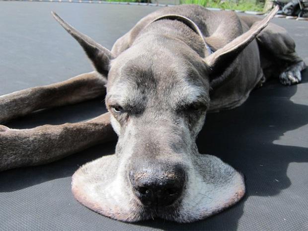 Bộ ảnh chứng minh sự lười biếng có thể khiến lũ động vật biến thành chất lỏng - Ảnh 15.