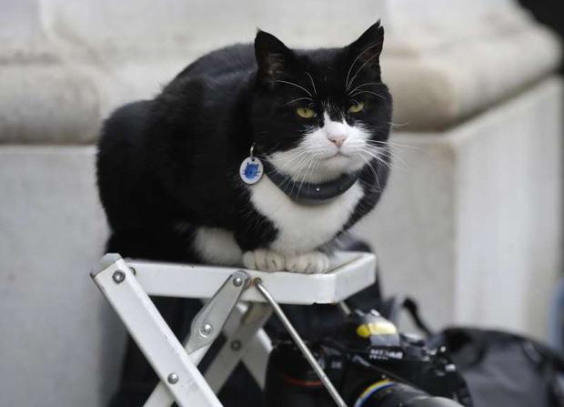 Mèo Palmerston - tổng quản diệt chuột hàng đầu nước Anh đã chính thức về hưu - Ảnh 1.