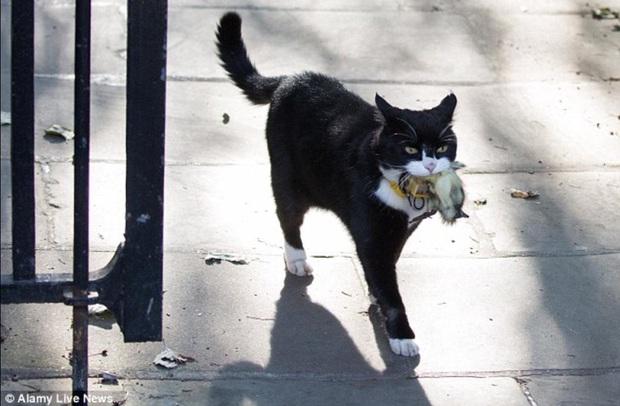 Mèo Palmerston - tổng quản diệt chuột hàng đầu nước Anh đã chính thức về hưu - Ảnh 2.