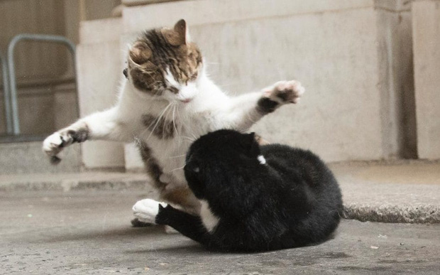 Mèo Palmerston - tổng quản diệt chuột hàng đầu nước Anh đã chính thức về hưu - Ảnh 6.
