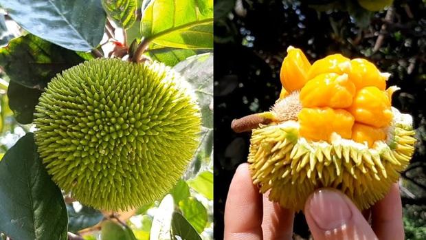 """Những loại trái cây rất phổ biến ở Việt Nam nhưng lại là """"nỗi ám ảnh"""" trong mắt người nước ngoài vì hình thù kỳ dị - Ảnh 8."""