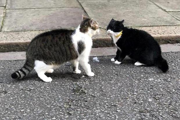 Mèo Palmerston - tổng quản diệt chuột hàng đầu nước Anh đã chính thức về hưu - Ảnh 5.