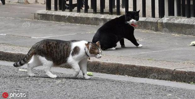 Mèo Palmerston - tổng quản diệt chuột hàng đầu nước Anh đã chính thức về hưu - Ảnh 4.