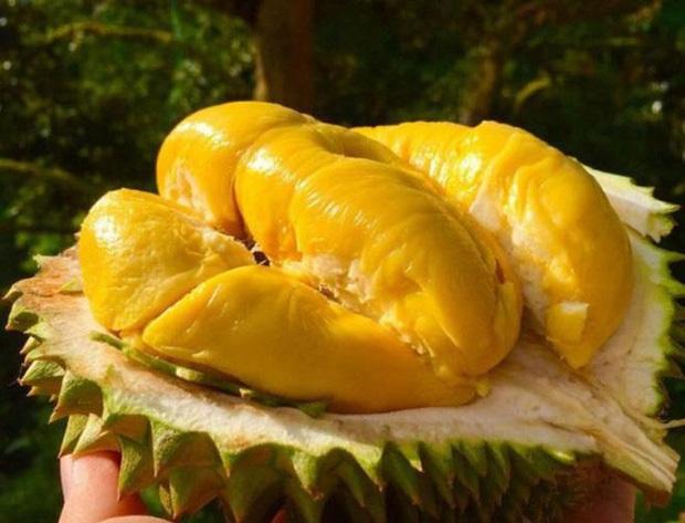 10 loại quả hiếm có khó tìm nhất thế giới nhưng Việt Nam đã có 4 trong số đó, còn mọc nhiều là đằng khác - Ảnh 6.