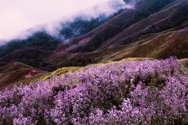 Sự thật về loài hoa Chi Pâu: nguồn gốc cái tên nghe xong chỉ muốn cười té ghế nhưng quan trọng là đẹp như cảnh ở nước ngoài - Ảnh 2.