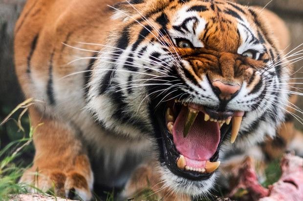Nàng hổ móm được lắp răng giả mạ vàng xịn đét, tăng muôn phần cool ngầu với chị em - Ảnh 6.
