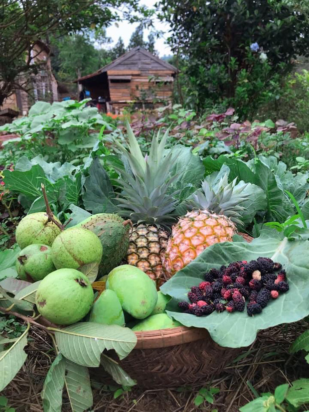 Bỏ thành phố lên Tây Nguyên nuôi cá, trồng rau: Cặp đôi Sài Gòn khiến tất cả ngưỡng mộ với cuộc sống tựa cổ tích - Ảnh 4.