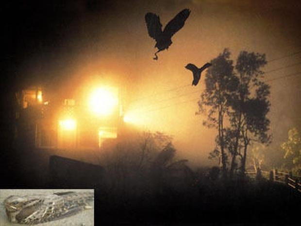 Chuyện rùng rợn về ngôi làng bí ẩn nơi có hàng ngàn con chim bay đến tự sát, 100 năm qua vẫn khiến khoa học đau đầu đi tìm lời giải - Ảnh 3.